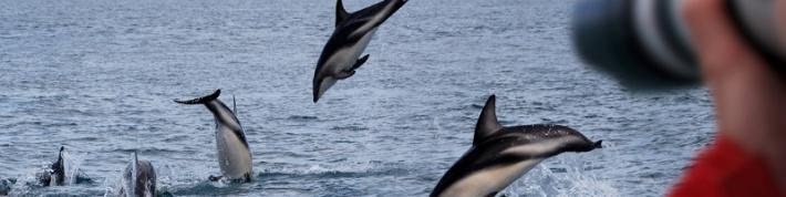 Norfolk-szigetek - Vízumügyintézés